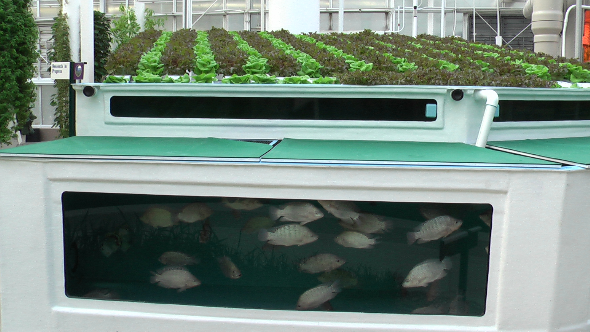 aquagrow 36 an innovative aquaponics technology