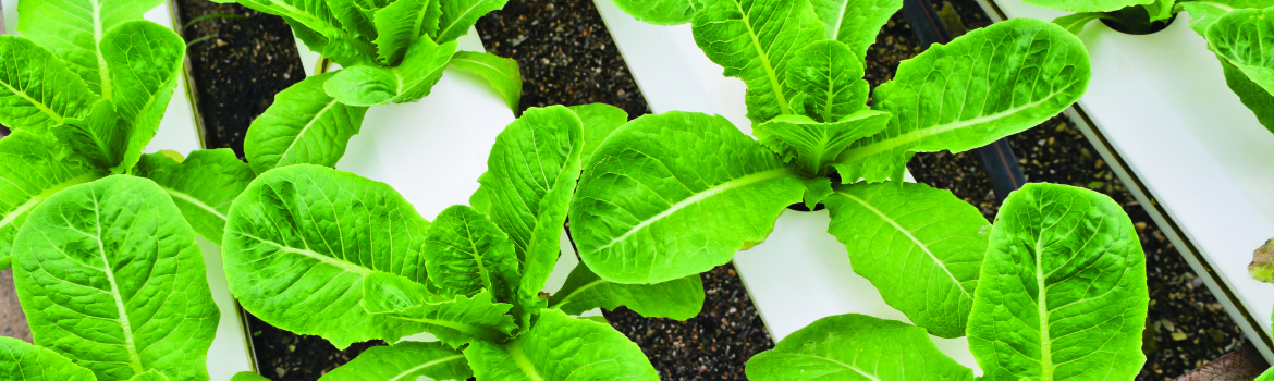 Aquaponics System: What You Need To Know