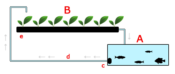 How to Build a Simple Aquaponics System